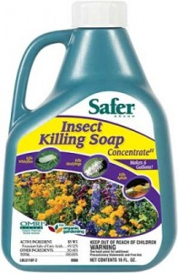 insecticidal-soap-lg-262x400