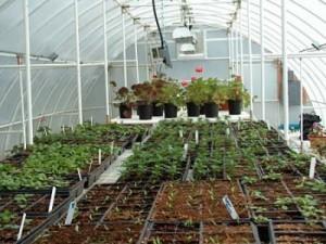 conservatory-greenhouse-lg-400x301
