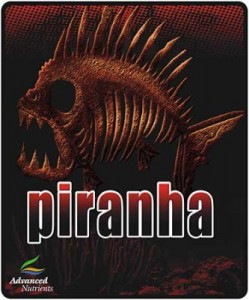 piranha-lg-333x400