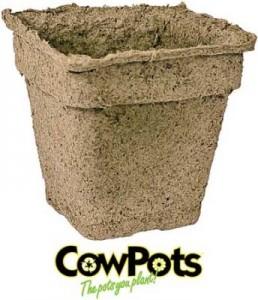 cow-pots-bulk-lg-344x400