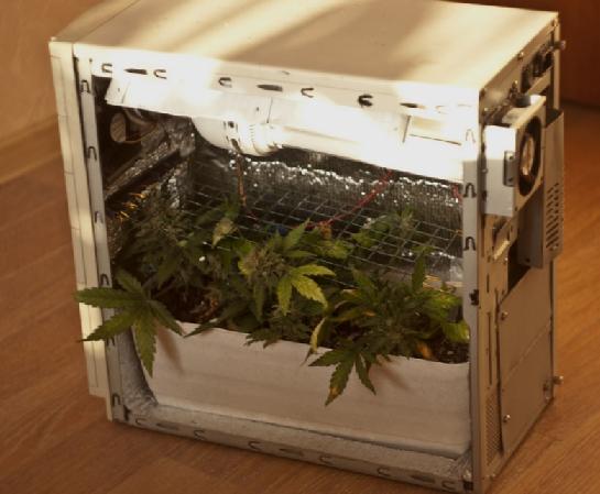 Системный блок для выращивания конопли сроки за выращивание марихуаны