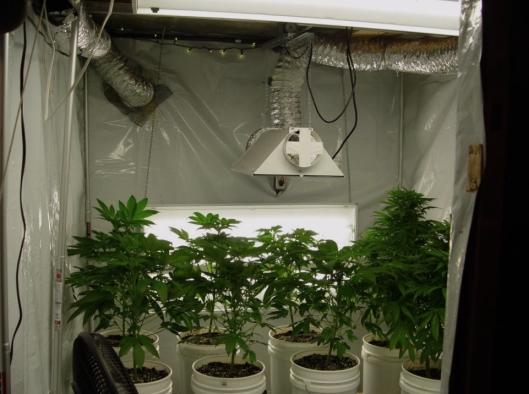 Вентиляция марихуаны что говорят о марихуане
