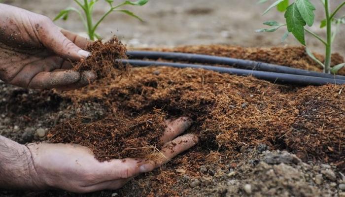 банановый чай, удобрение своими руками, удобрения, органические удобрения, купить удобрения, виды удобрений, удобрения купить, удобрение коровяк, разбрасыватель удобрений, комплексное удобрение, удобрение для марихуаны, удобрение для конопли, удобрение для каннабиса, удобрение это, удобрение зола, компост,